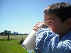 Latte vaccino, ecco perché preferirlo agli altri tipi