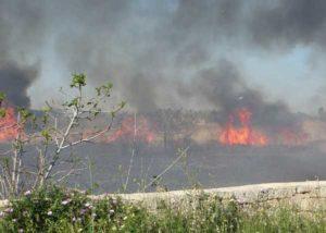 Emergenza incendi, a Gallipoli il provvidenziale intervento degli agenti della Polizia