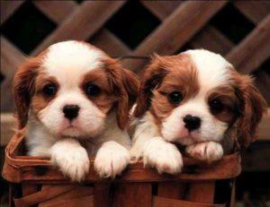 Dognapping, aumentano in Italia i rapimenti di cani: denunciati solo il 3%