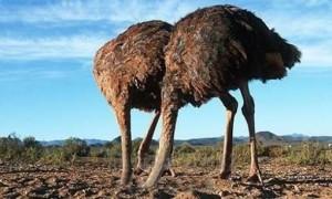 """Beppe Grillo presenta """"Gli struzzi del Primo Maggio"""""""