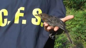 Pesaro: arrestato un guardiacaccia, bracconiere a tempo perso