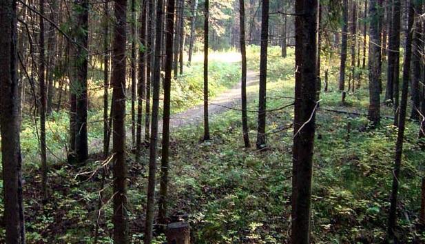 La Biblioteca del futuro è un bosco della Norvegia