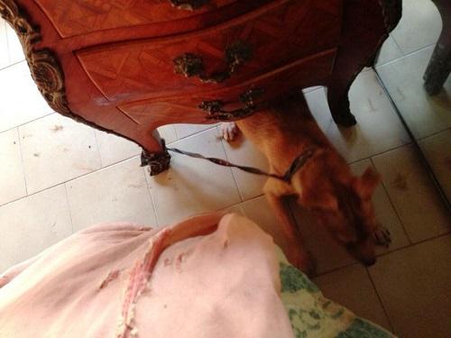 Napoli, 65 gatti e 18 cani segregati in casa: denunciata 61enne per maltrattamento
