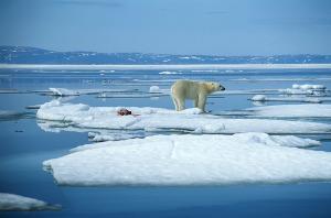 Cambiamenti climatici: gas serra ai massimi livelli