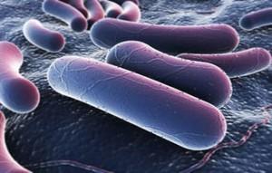 "Batteri super resistenti, l'Inghilterra lancia l'allarme: ""Rischio epidemie"""