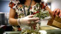 Cannabis, oggi il voto: discussione su condizioni d'uso e autocoltivazione