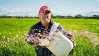 L'agricoltura siciliana torna a puntare sul riso