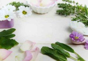 Esplorando il potere curativo delle piante